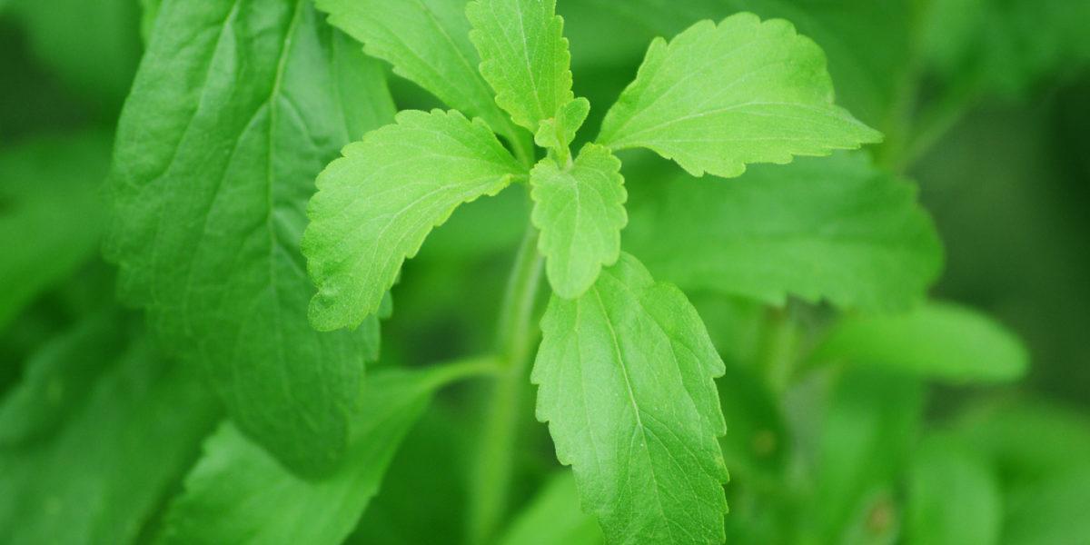 Next generation stevia